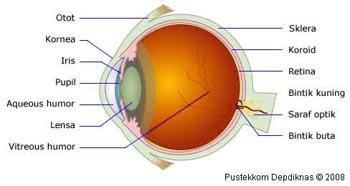 Struktur mata pada manusia