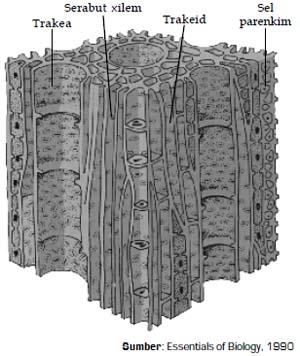 Sel-sel penyusun xilem