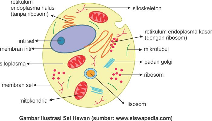 Gambar ilustrasi sel hewan